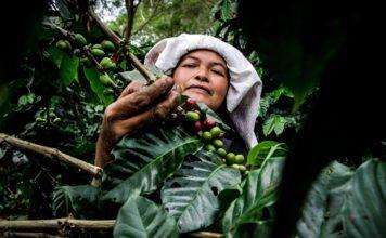 Kahve kültürü arabika