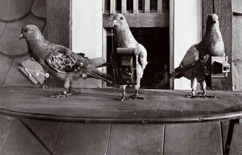 güvercinler ile çekim
