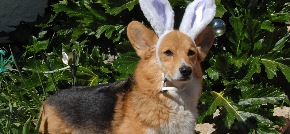 Easter with Your Dog