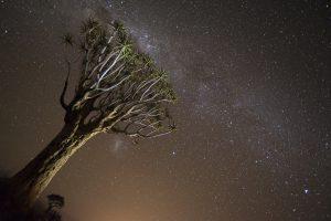 Namibian night sky stars galaxies tree quiver tree