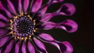 flower photography Anna-Mart Kruger