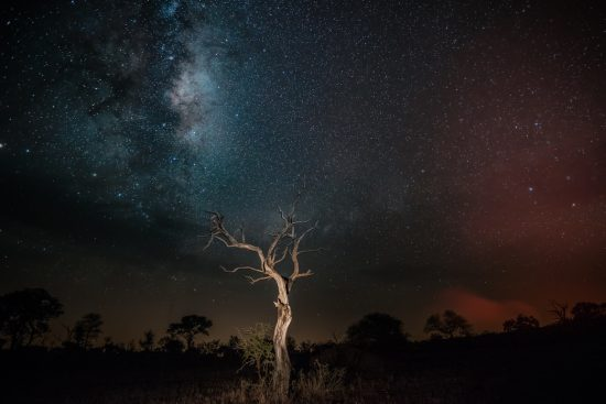 African stars and milkyway with trees