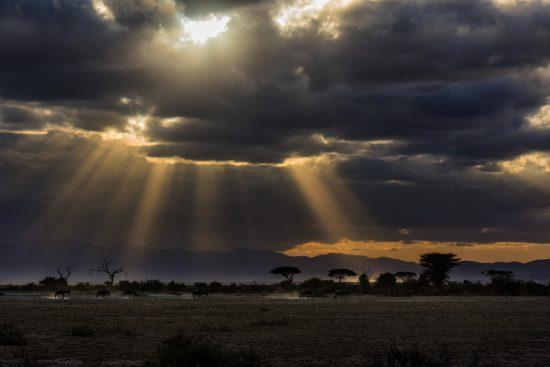 Cliff Rosenberg: Wildebeest beautifully-highlighted by the rays of the setting sun in Amboseli National Park Kenya