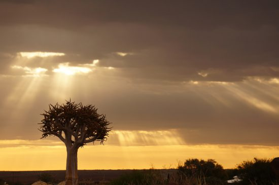 Agnes Schildorfe: Kokerboom in Namibia Southern Africa