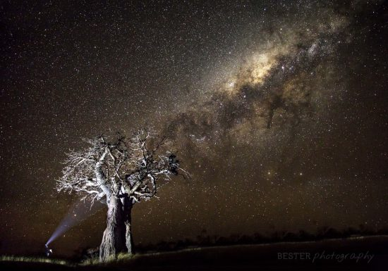 An African tree under the stars and milkyway