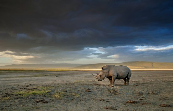 Rhino with storm clouds
