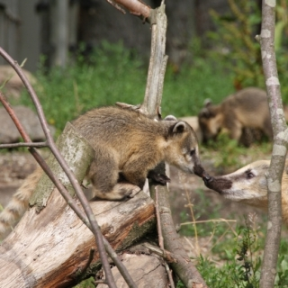 Tiere ganz nah erleben im Tierpark Gettorf