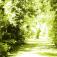 Stadtführung Blätter und Plätze – Stadt- und Baumgeschichten