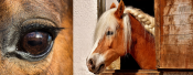 Pferdefest Lüdershagen