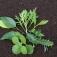 Pflanzenvermehrung im Kinderzimmergewächshaus - Angebot für Kinder (6 bis 12 Jahre)
