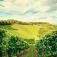 Winemaker Dinner · Celler de Capcanes