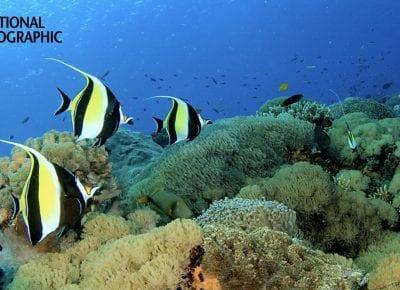 Webinar: Adrian Gahan on the future of marine ecosystems