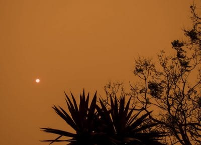 Australia fires: Four ways you can help