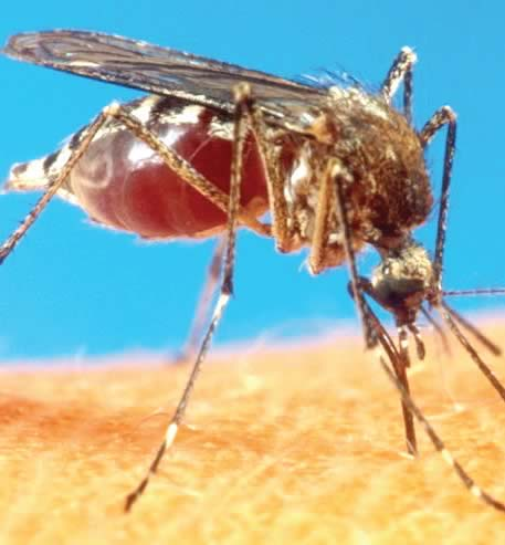 Beware, no malaria case is 'ordinary'