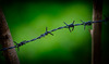 Barbedwire_thumb
