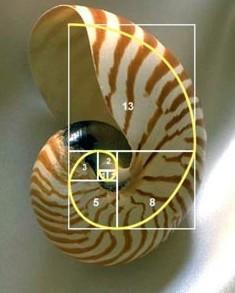 Numeros fibonacci forex
