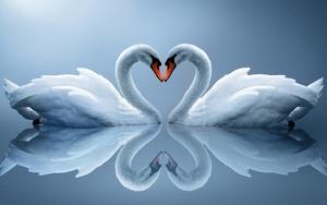 Cisnes blancos 3 col