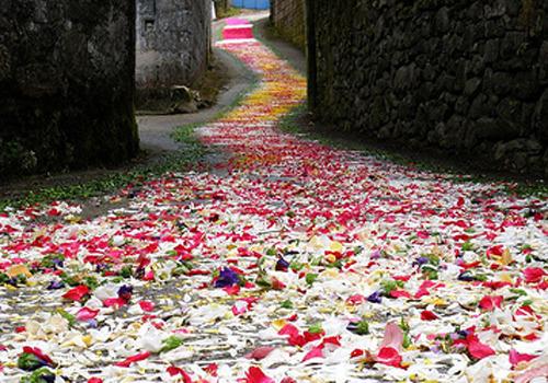 El camino. Rosas