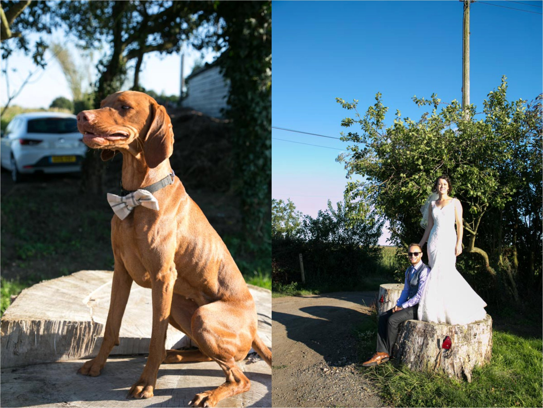 dog with bow tie on at wedding and bride and groom with blue sky