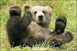 Bear Empowerment Reiki Attunement