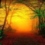 Essential  Earth Love Attunement