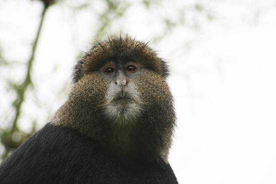 Tracking gorillas in Rwanda with Rhino Africa