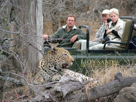 Go on game viewing safaris and see the Big Five