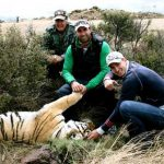 Time with tigers outside the small town of Philippolis in the Karoo.