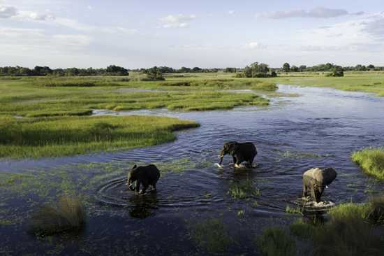Wilderness Safaris in Botswana