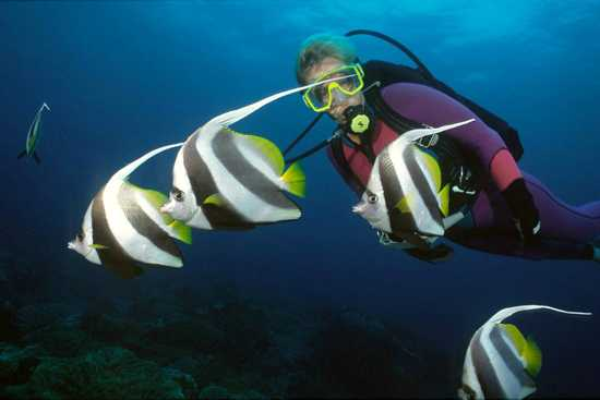 The Indian Ocean is known for exceptional scuba diving.