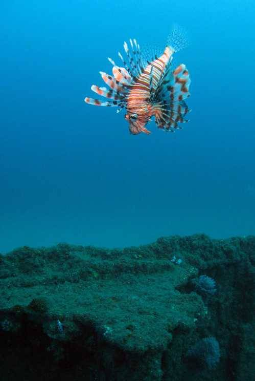 Spectacular marine life awaits