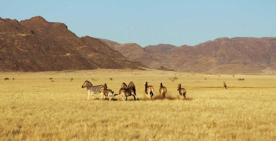 Zebras, gembsbok and spingbok are common sites in Sossusvlei