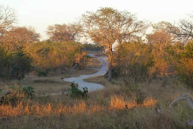 """""""On our way, following the lion tracks in the early morning."""""""