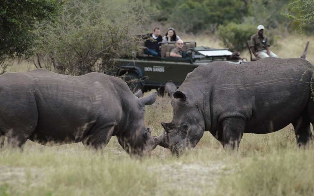 Rhino viewing on a game drive