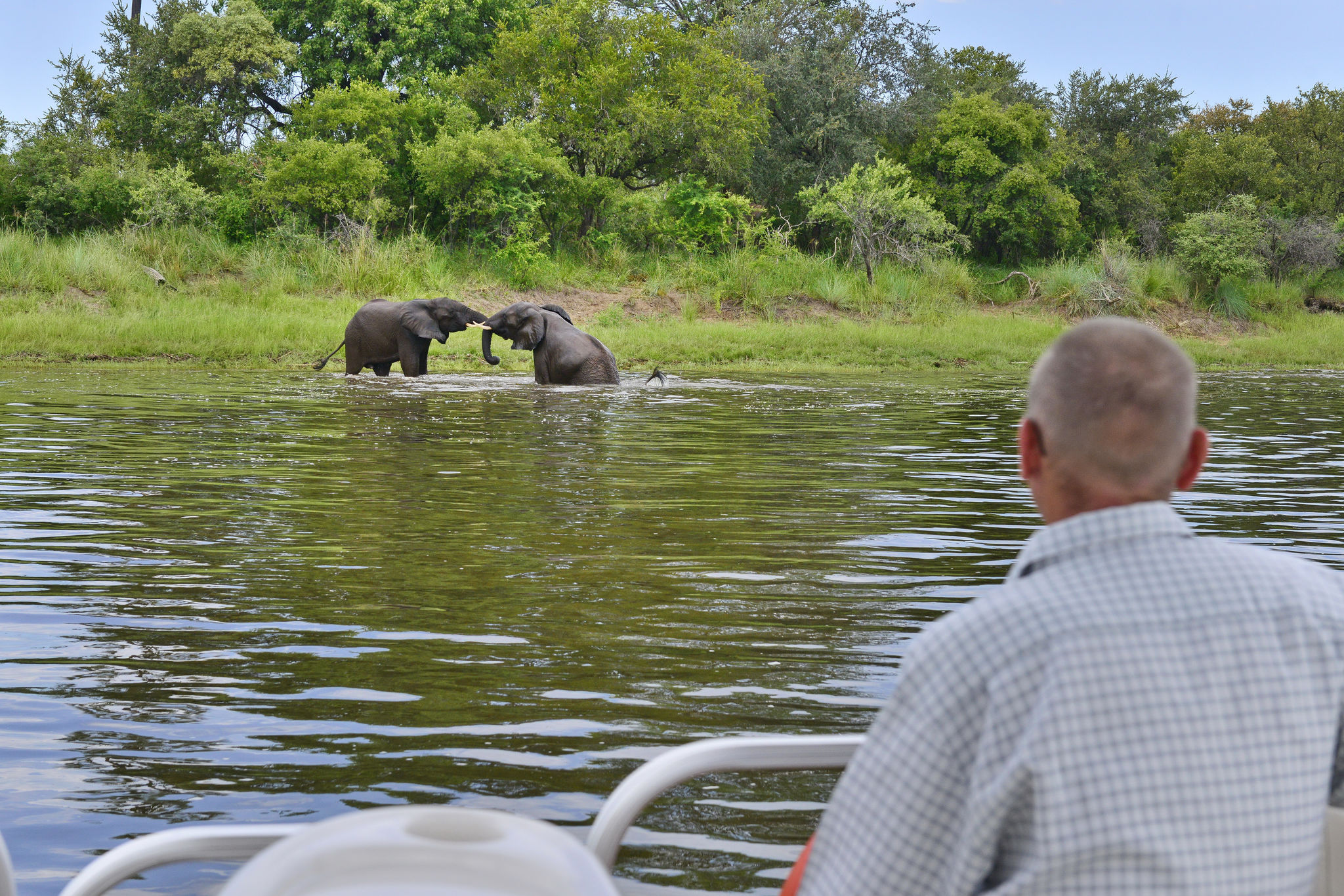 man watches elephants fighting from boat