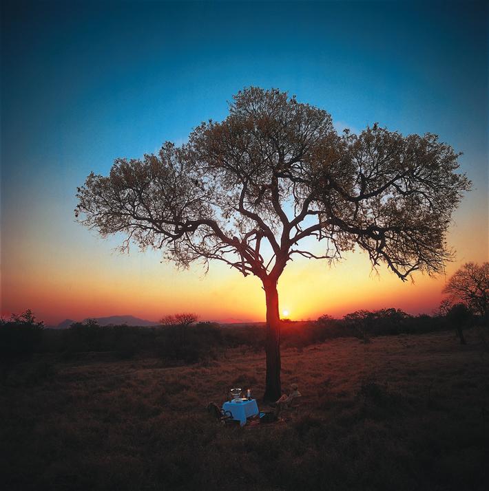 Safari sunset in Royal Malewane