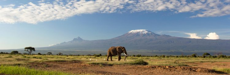 Elephant-In-Front-Mt-Kilimanjaro-Wide-Angle