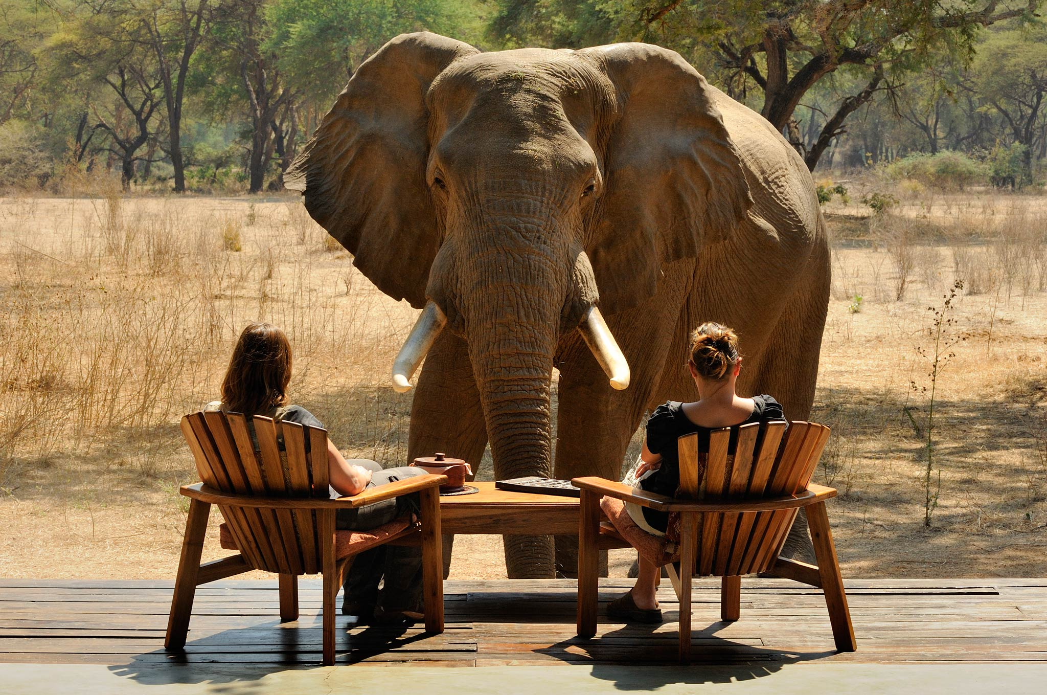 Elephant in front of two people at Old Mondoro Lodge (Photo by Marsel van Oosten)