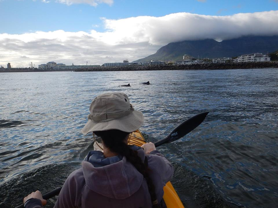 Kayaking with dolphins in Cape Town