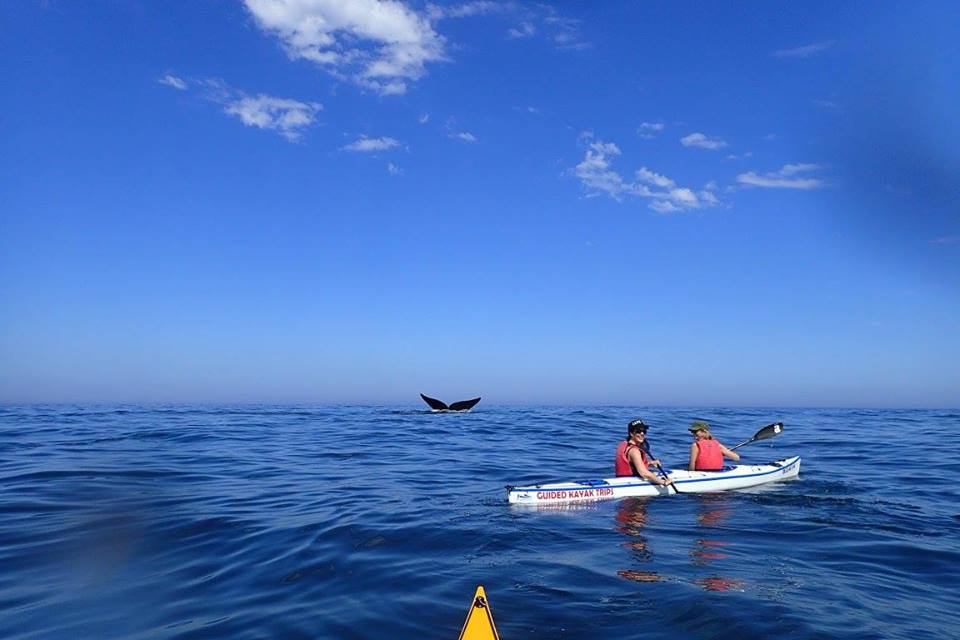 Whale tail and sea kayakers