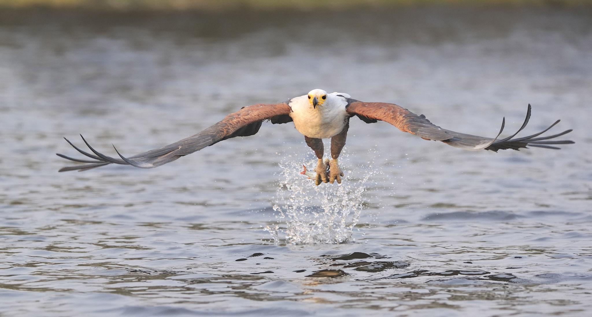 sabi-sabi-earth-lodge-wildlife-birds-06