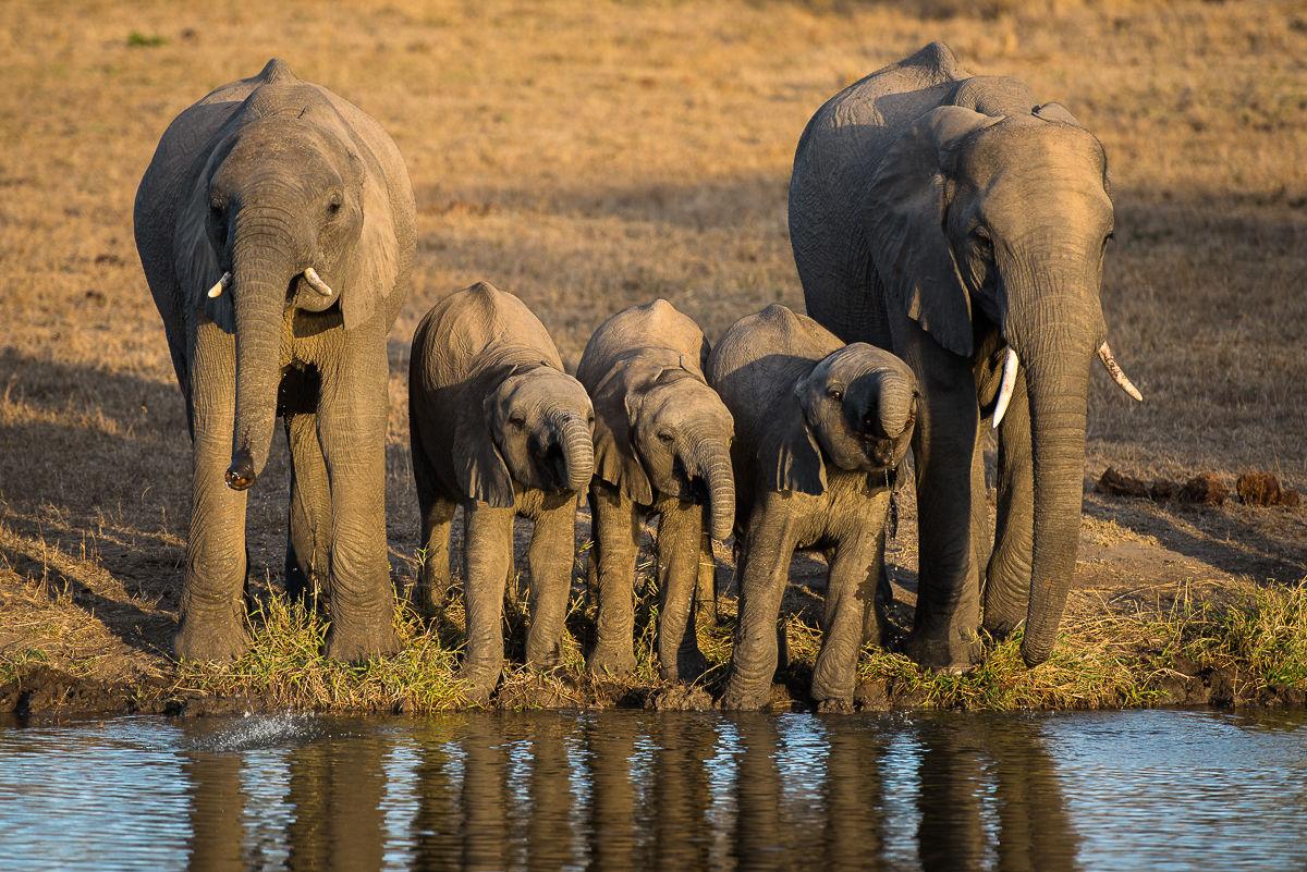 sabi-sabi-earth-lodge-wildlife-elephants-02