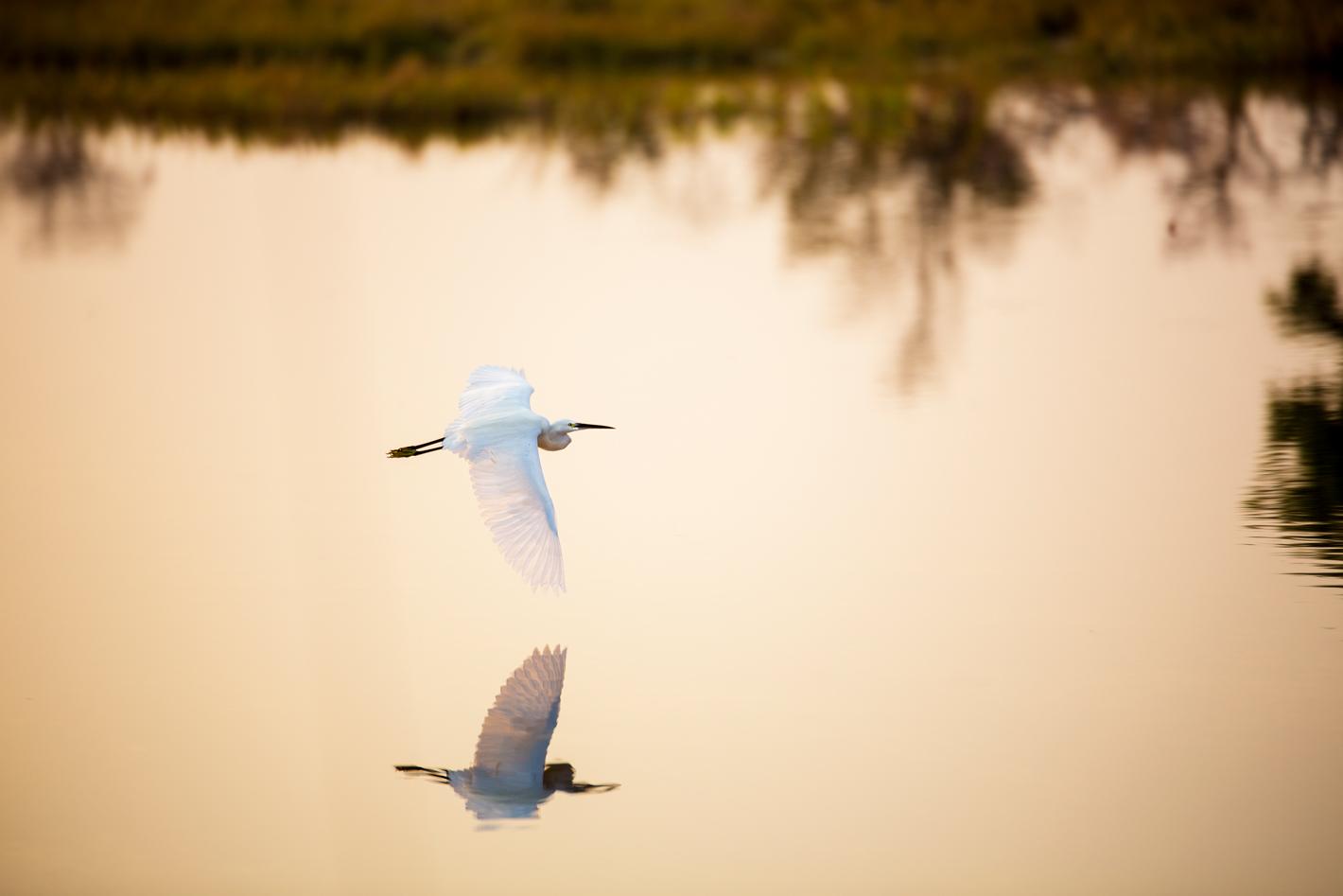 bird silhouette on wetland