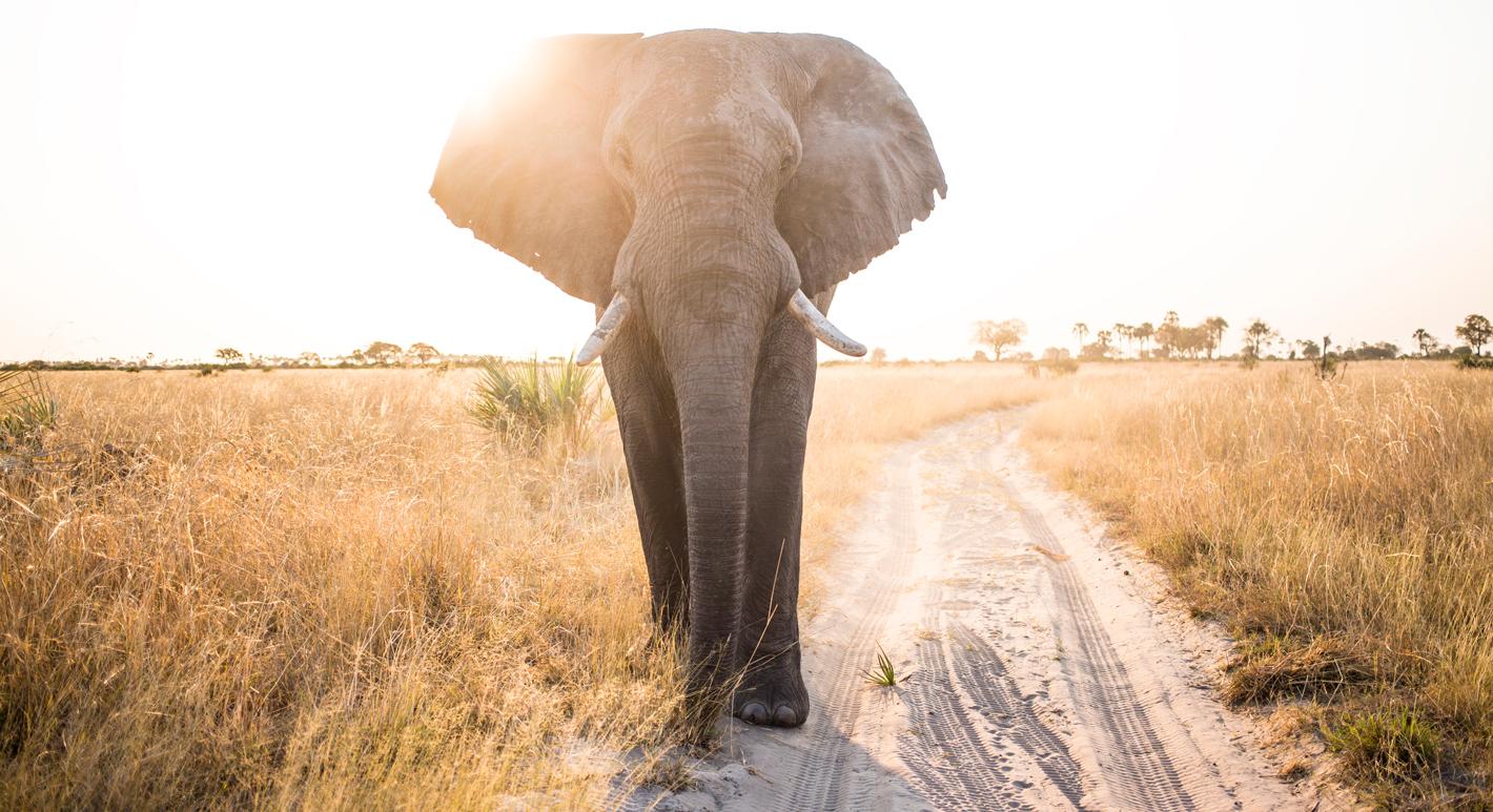 intimate elephant close-up
