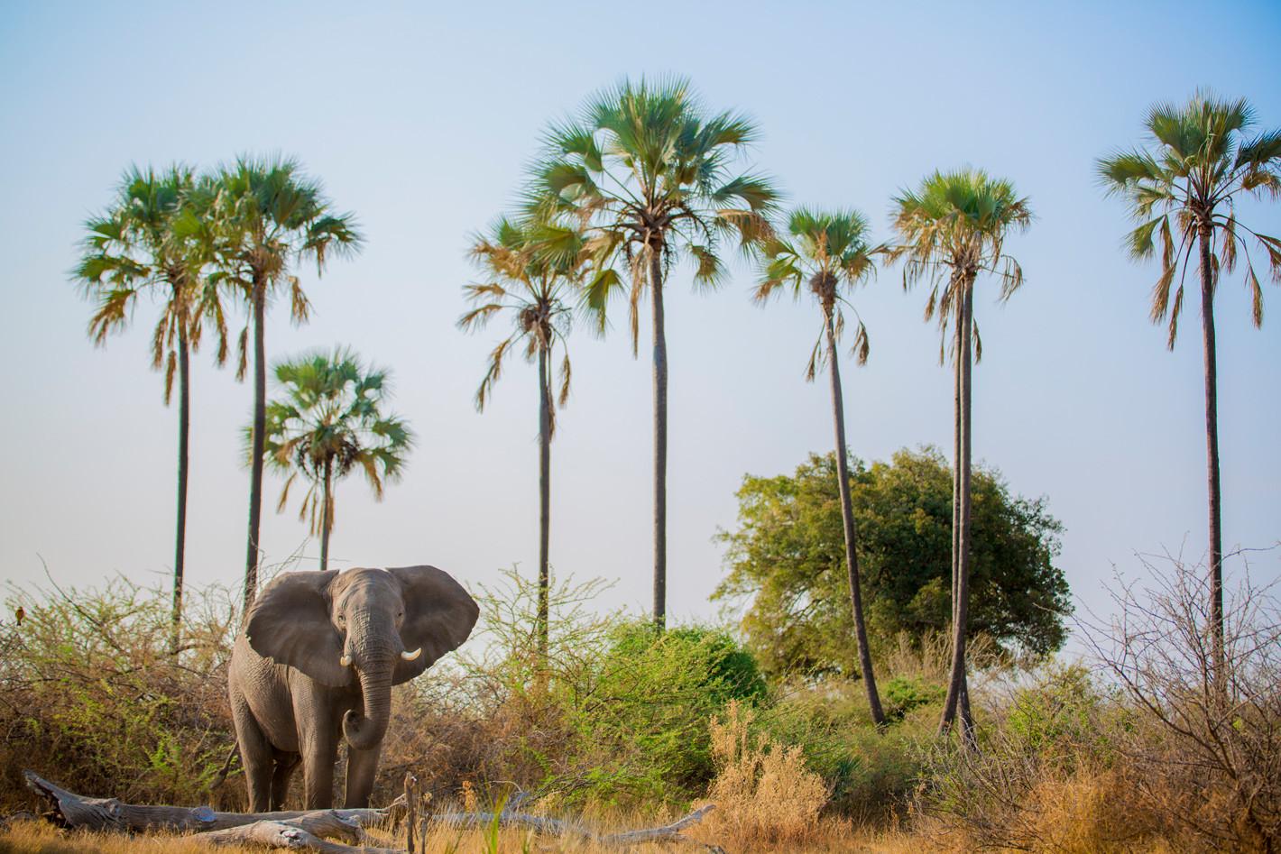 plam-trees-elephant
