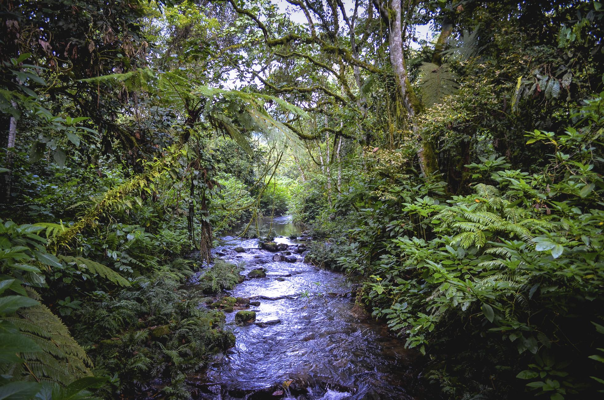 cree k through dense jungle
