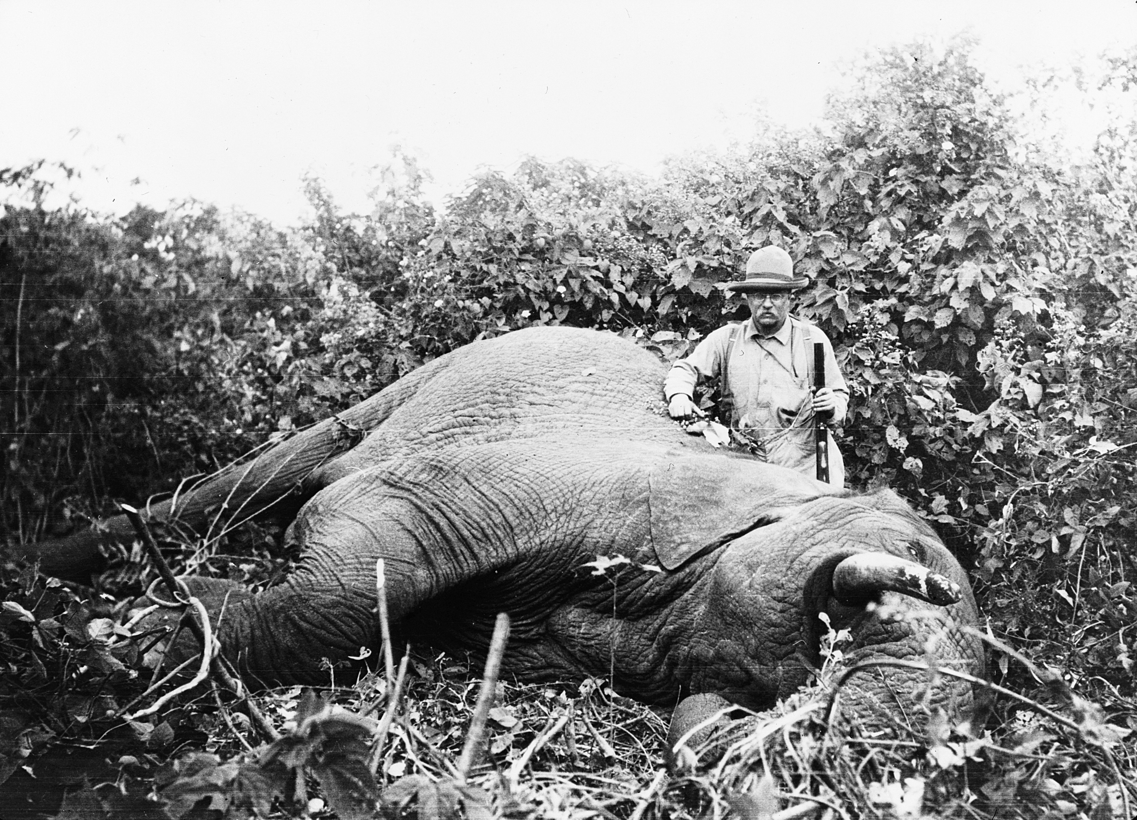 El presidente Roosevelt posando junto a un elefante durante un safari