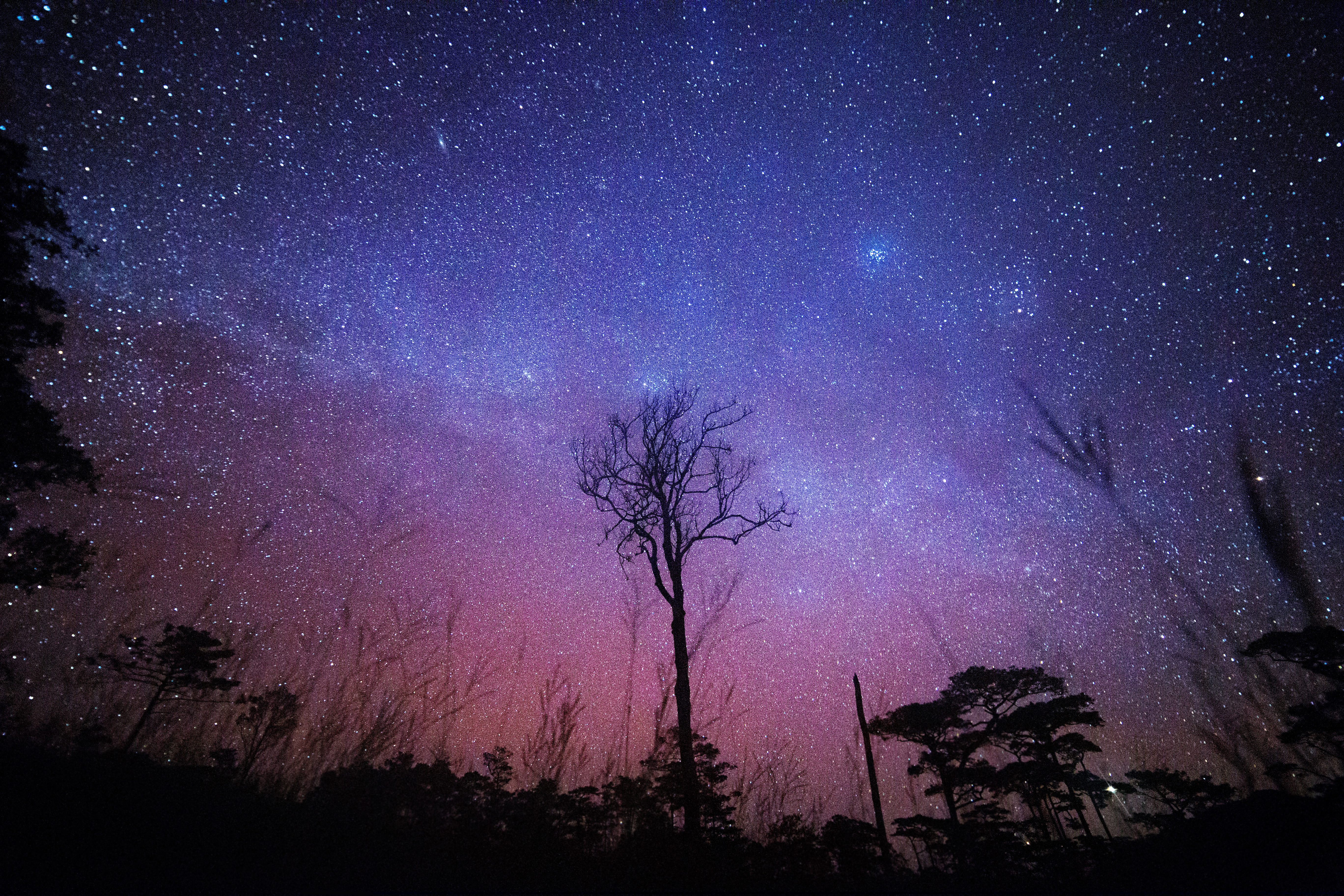 silhouette tree with stars