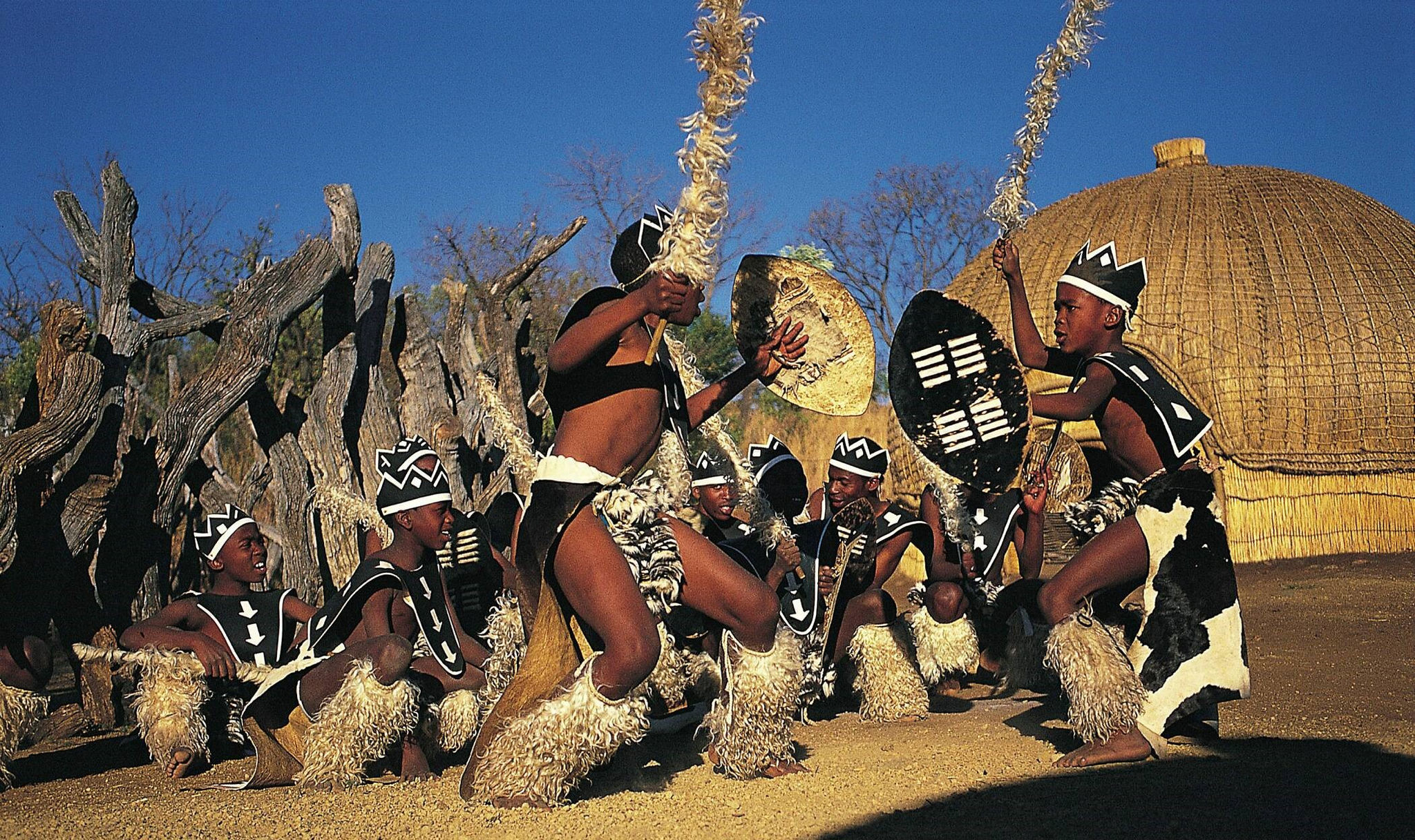 zulu traditional dance With their traditional dances they in a typical zulu dance large and high steps and the zulu reed dance is an opportunity for young girls to get.
