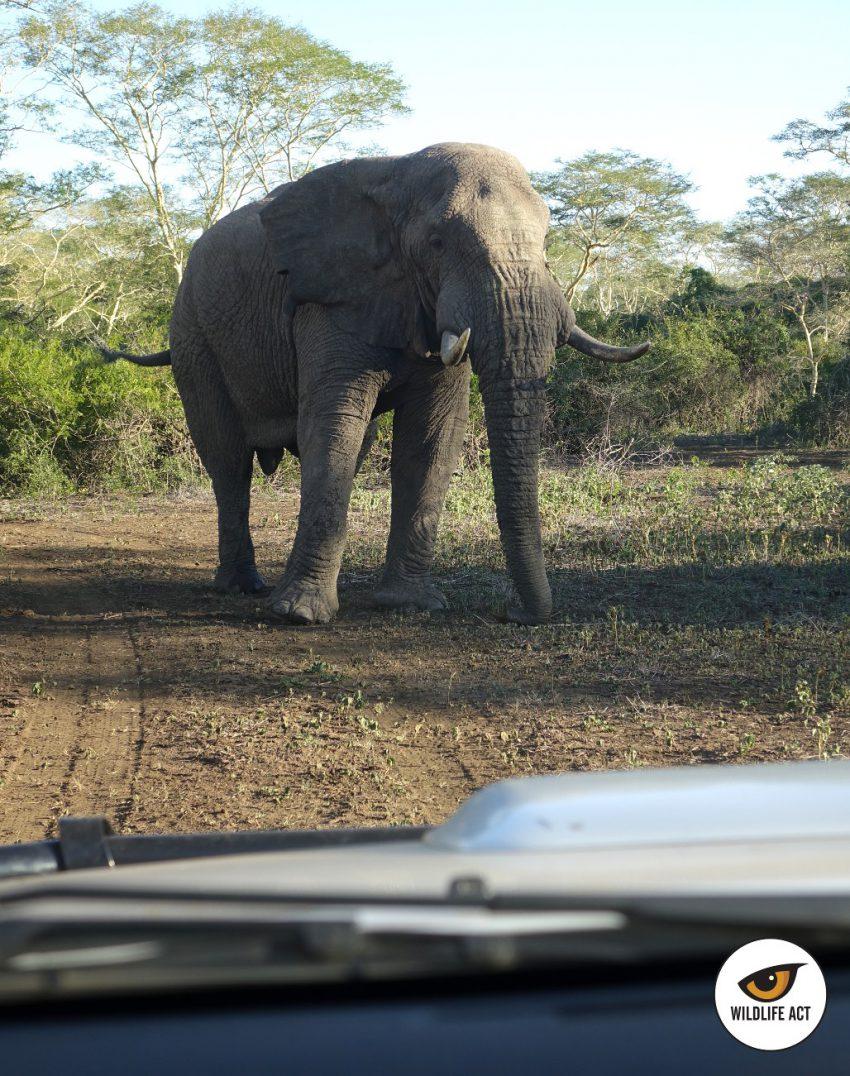 Elefante situado en medio del camino